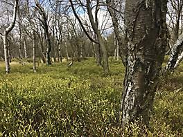 Les u obce Tisá